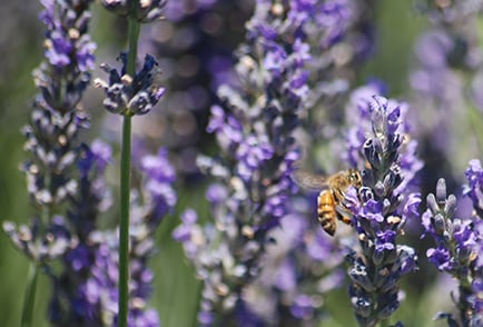 Visit-Us-Beechworth-Honey-Garden
